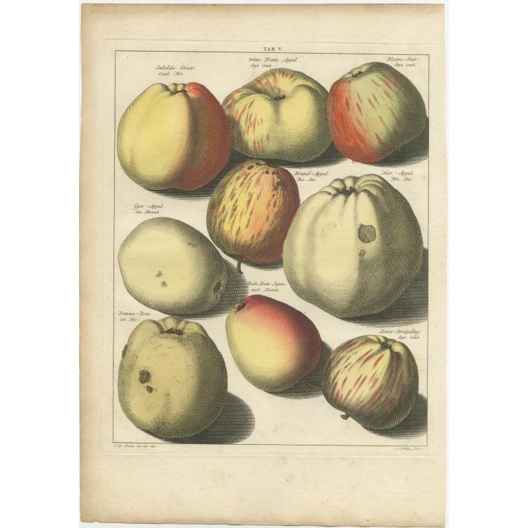 Tab. V Antique Print of various Appples by Knoop (1758)