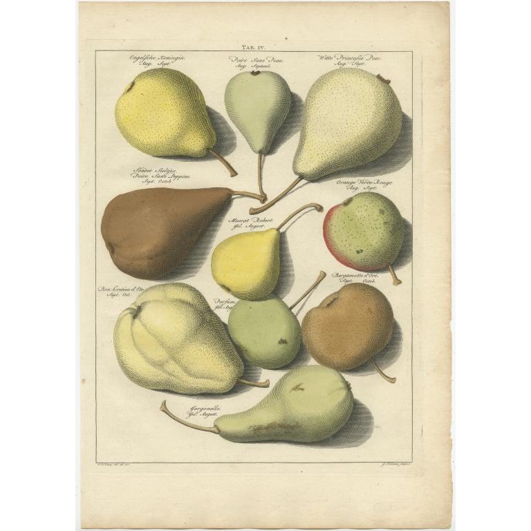 Tab. IV Antique Print of various Pears by Knoop (1758)