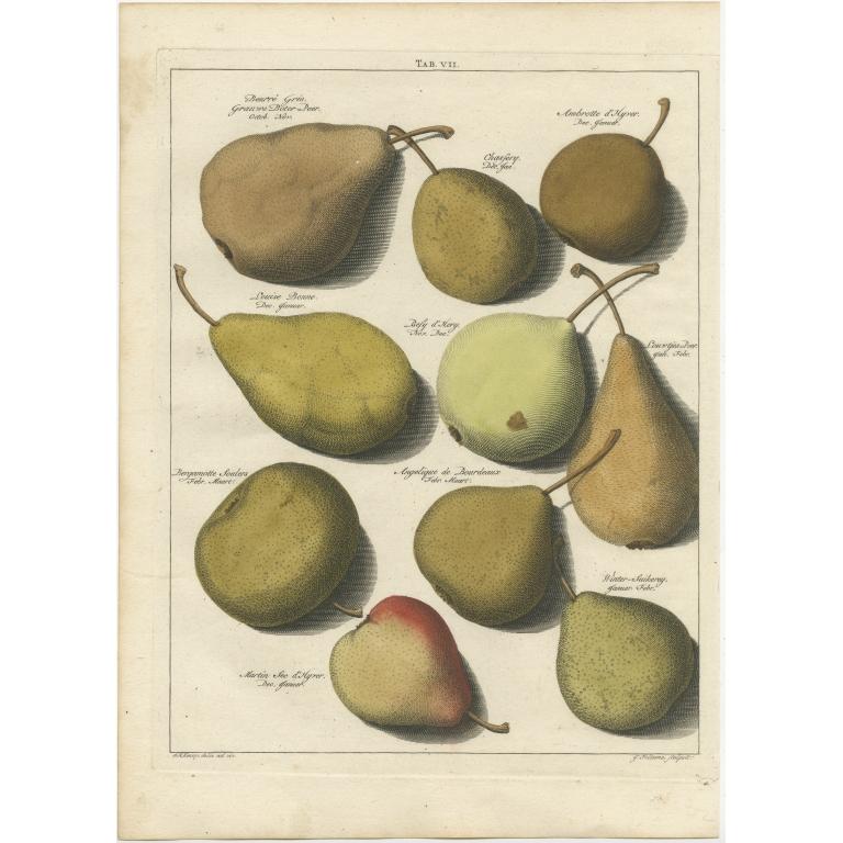 Tab. VII Antique Print of various Pears by Knoop (1758)