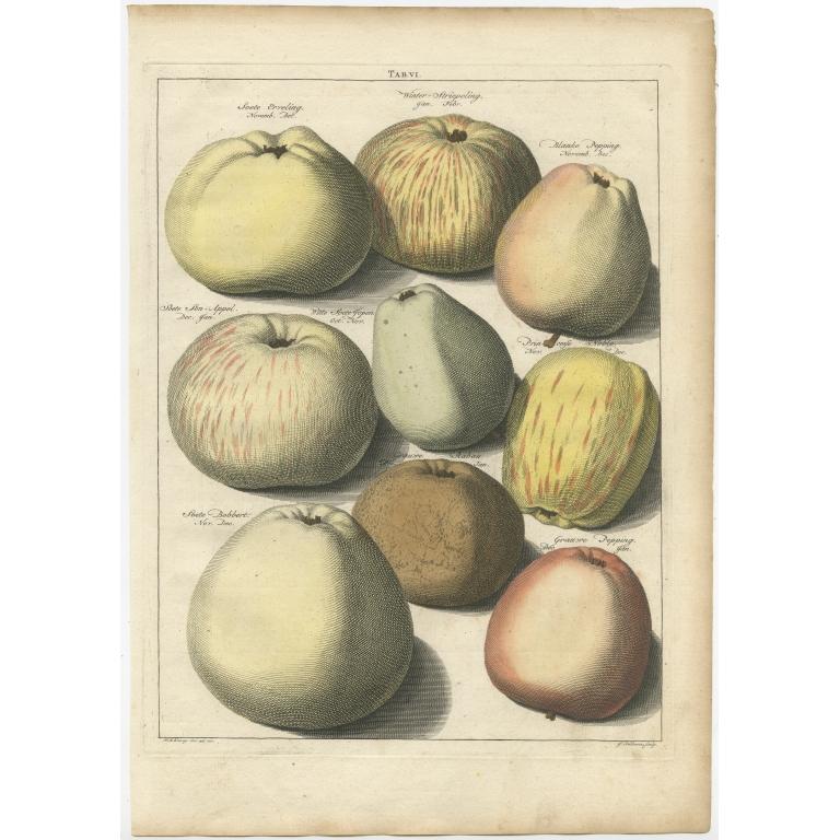 Tab. VI Antique Print of various Apples by Knoop (1758)