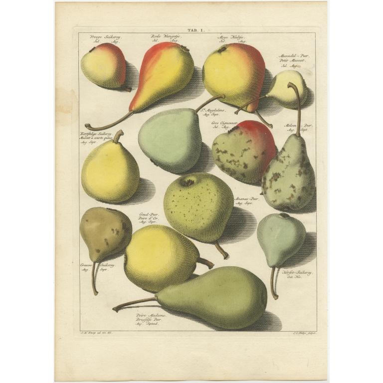 Tab. I Antique Print of various Pears by Knoop (1758)