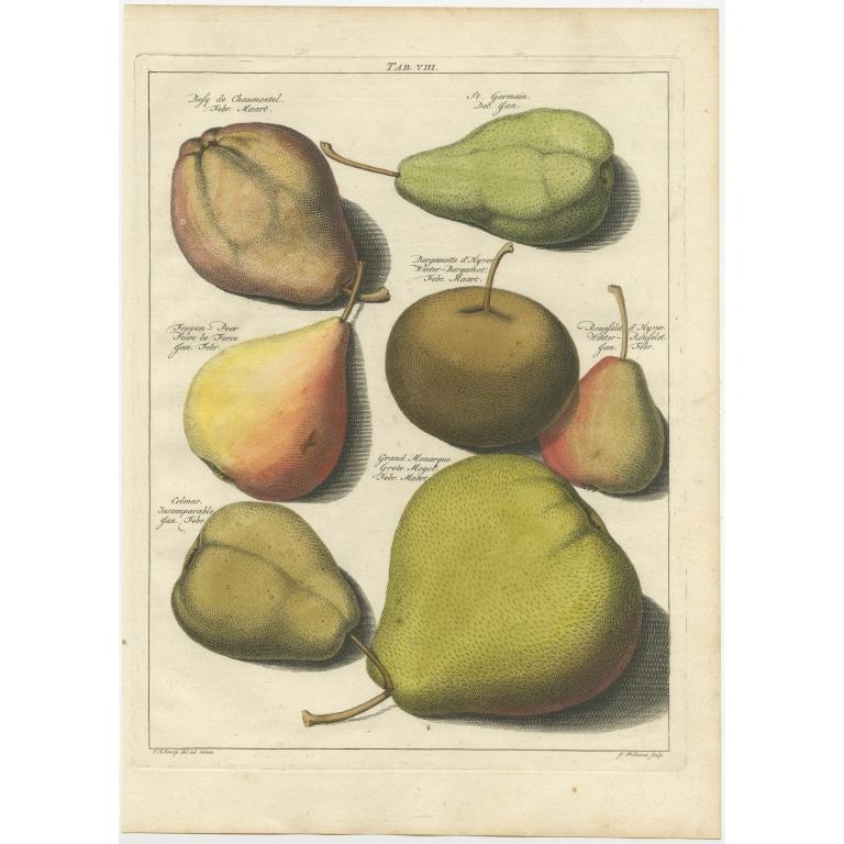 Tab. VIII Antique Print of various Pears by Knoop (1758)