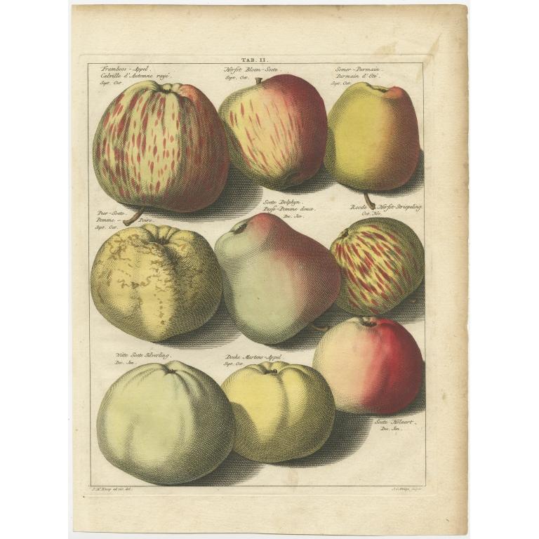 Tab. II Antique Print of various Apples by Knoop (1758)