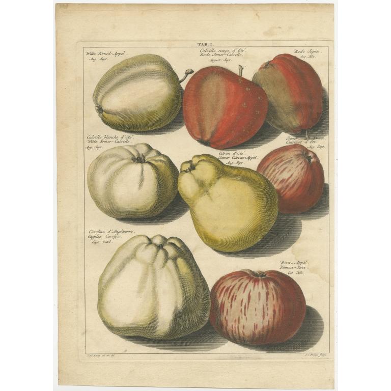 Tab. I Antique Print of various Apples by Knoop (1758)
