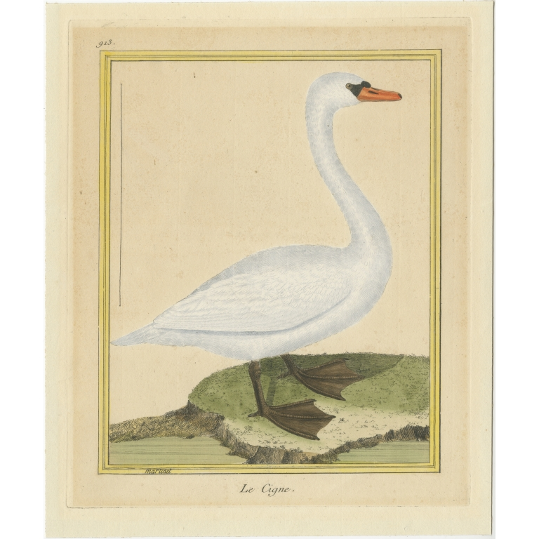 Antique Bird Print of a Swan by Martinet (c.1800)