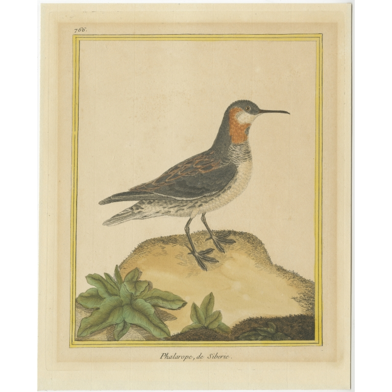 Antique Bird Print of a Red-Necked Phalarope by Martinet (c.1800)